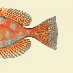 The Dybdahl Co. Dotted Orange Fish Tail