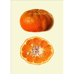 The Dybdahl Co. Mandarine