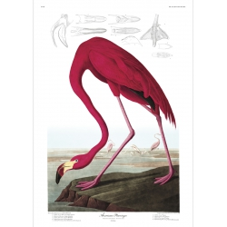 The Dybdahl Co. American Flamingo