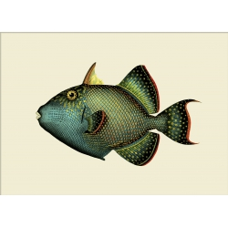 The Dybdahl Co. Trigger Fish
